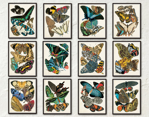 Butterfly Print Set - Set of 12 - Seguy Butterfly Print Set