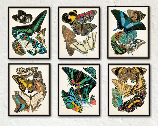 Butterfly Print Set No. 1 - Seguy Butterflies