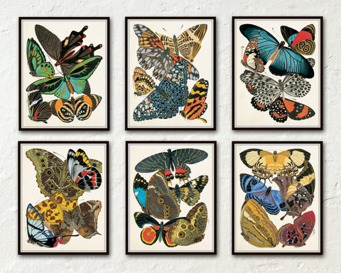 Butterfly Print Set No. 2 - Seguy Butterflies