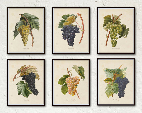 French Grapes Print Set 1 - Botanical Print Set