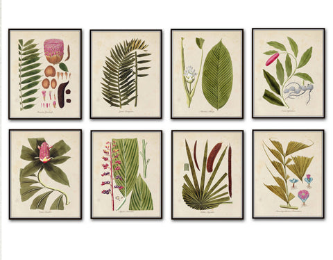 Botanical Print Set No. 5 - Giclee Art Prints