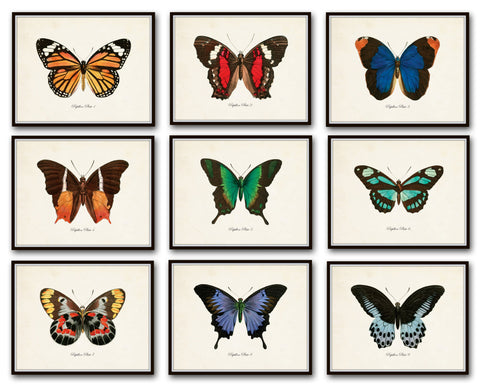 Papillon Butterfly Print Set No.12 - Vintage Butterfly Print Set