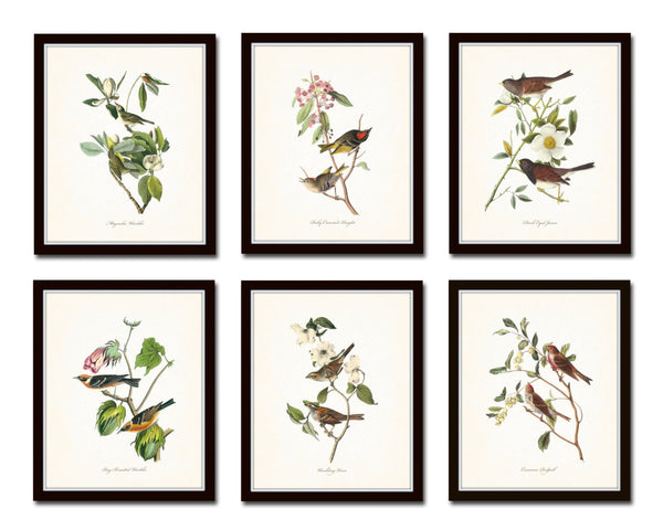 Audubon Bird Prints Set No. 1 - Vintage Bird Prints