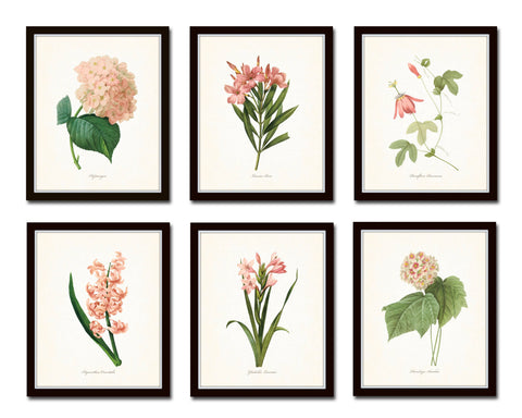 Pink Botanical Print Set No. 2 - Redoute Botanical Prints