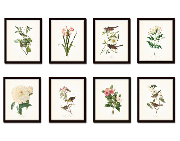Bird and Botanical Print Set No. 2 - Redoute & Audubon Prints