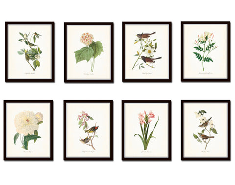 Bird and Botanical Print Set No. 3 - Redoute & Audubon Prints