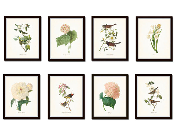 Bird and Floral Print Set No. 4 - Redoute & Audubon Prints