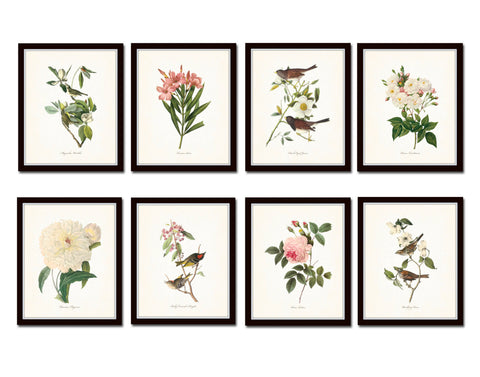 Bird and Botanical Print Set No. 1 - Redoute & Audubon Prints