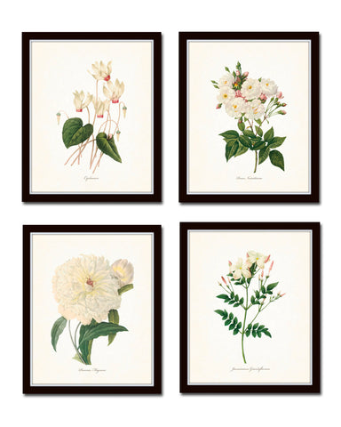 Redoute White Botanical Print Set No. 2