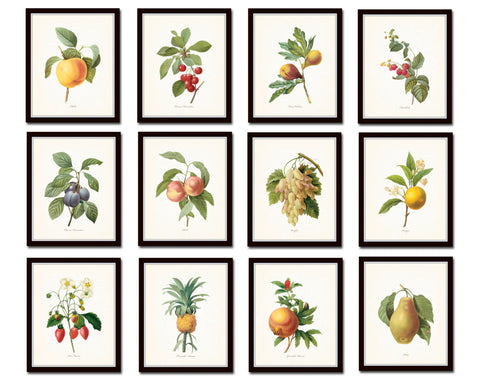 Antique Redoute Fruit Prints Set No 4