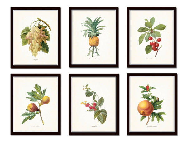 Antique Redoute Fruit Prints Set No 2