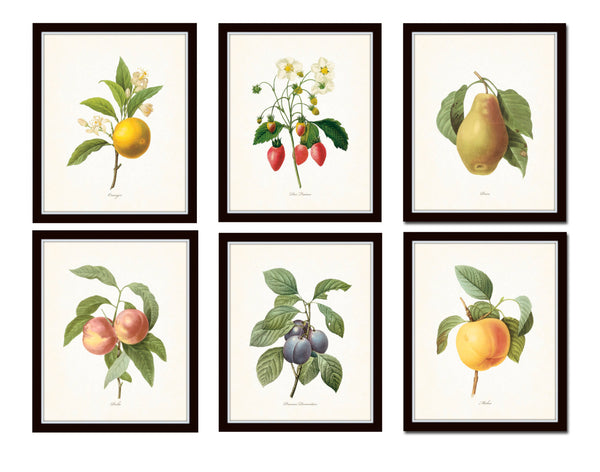 Antique Redoute Fruit Prints Set No 3