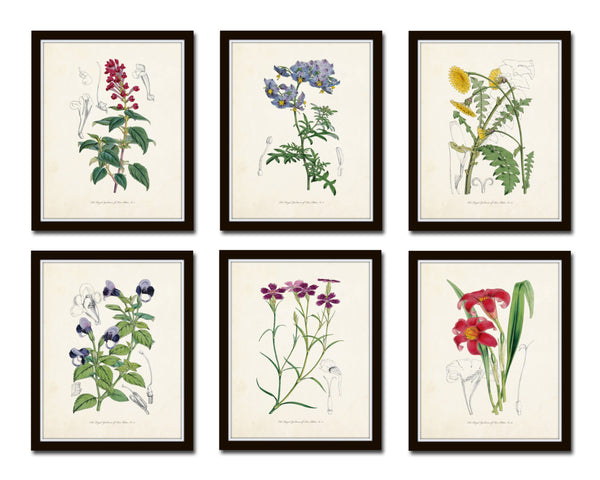 English Garden Botanical Print Set No. 5