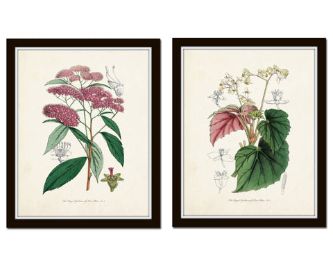 English Garden Botanical Print Set No. 6