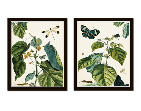 Nature Study Collage No. 23 Botanical Print Set