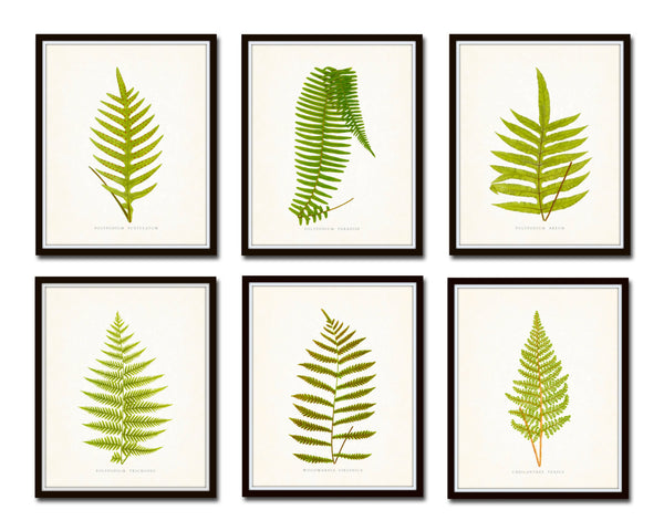 Vintage Ferns Print Set No. 2 - Botanical Prints