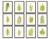 Vintage Ferns Print Set No. 3 - Gallery Wall Art