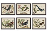Vintage Bird and Botanical Horizontal Print Set No. 6