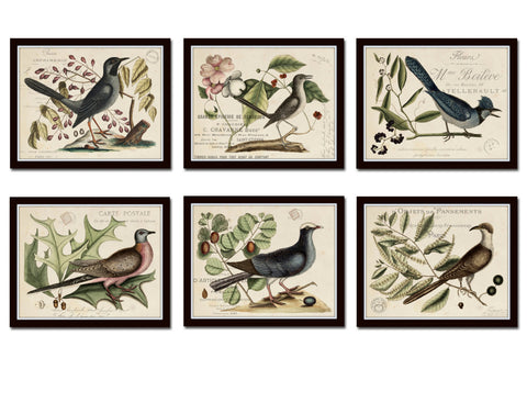 Vintage Bird and Botanical Print Set No. 6