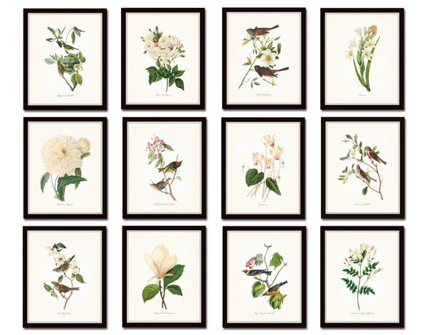 Bird and Botanical Print Set No. 10 - Redoute & Audubon Prints