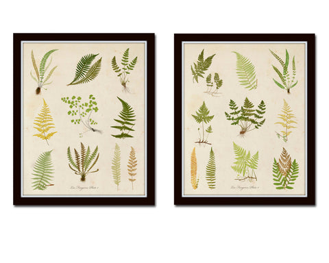Vintage Fern Collage Print Set