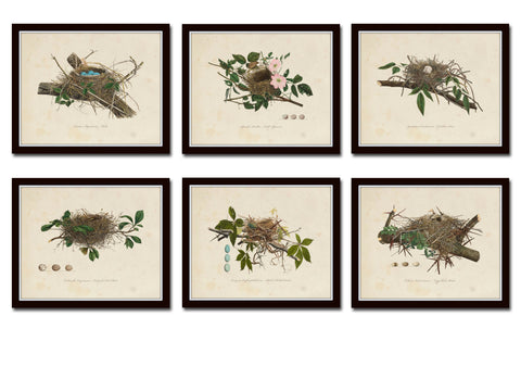 Vintage Bird Nests Print Set No. 1
