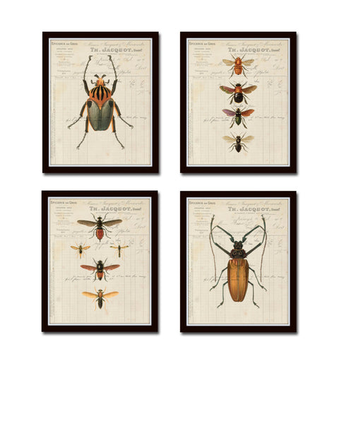 French Insect Study Print Set No. 2