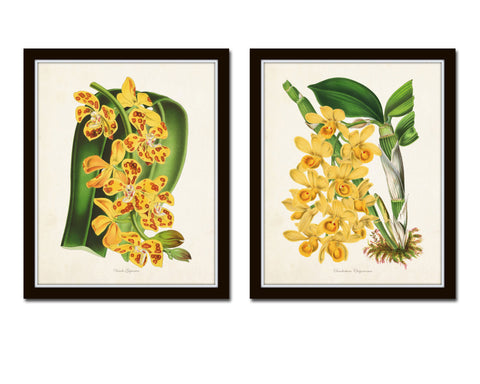 Yellow Orchid Print Set No. 1