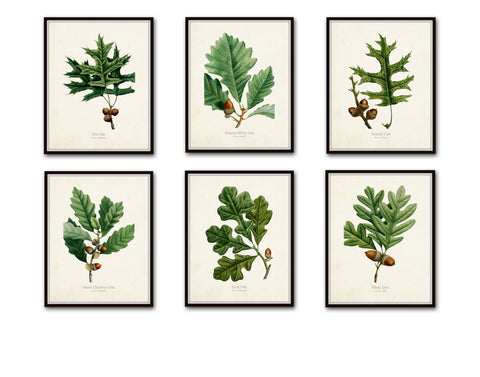Oak Leaf Botanical Print Set No. 3