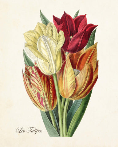 Vintage Tulips No.12 - Botanical Art Print