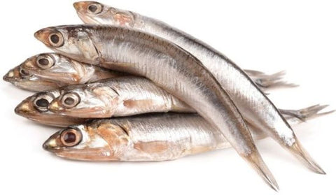 Anchovy Fish - Whole