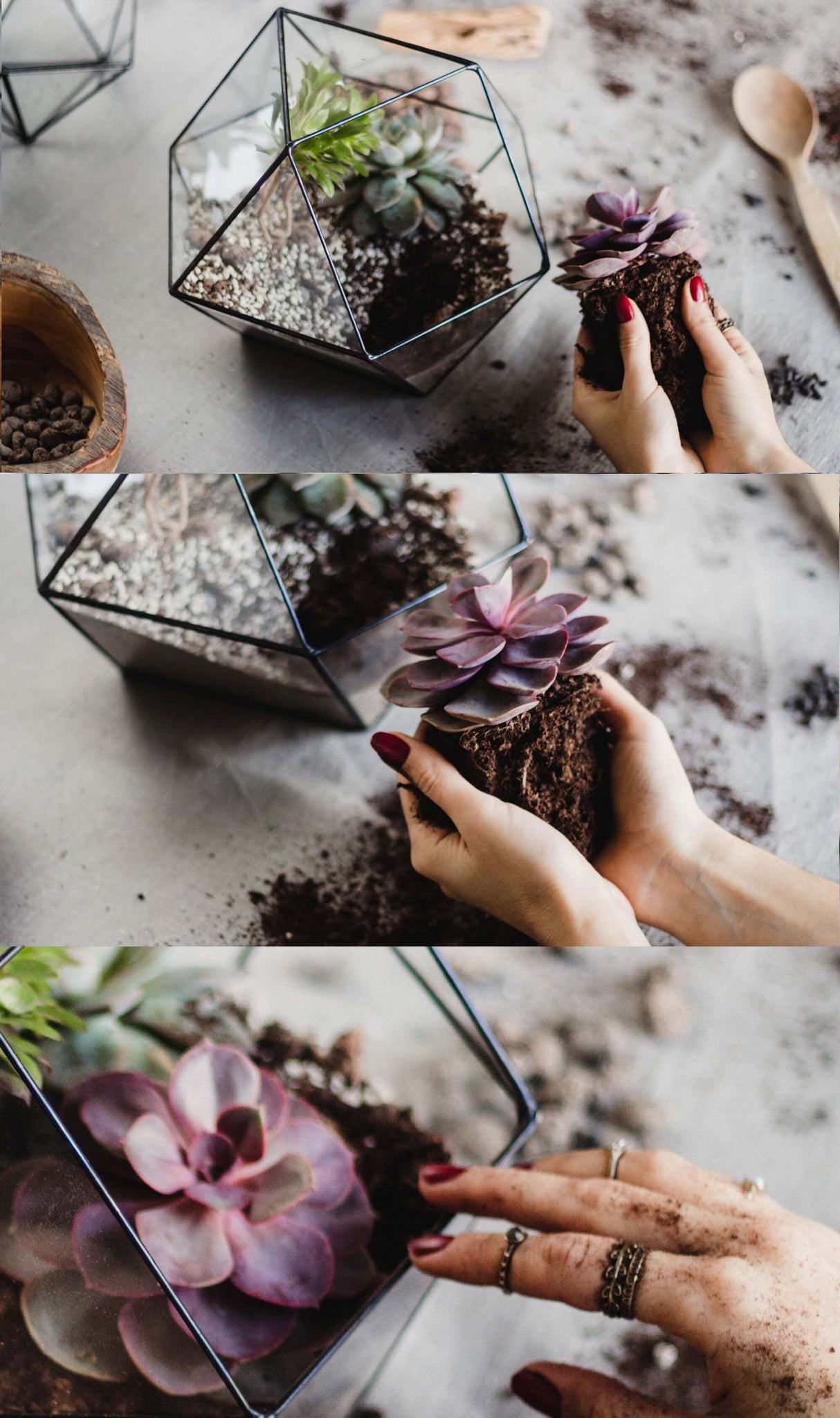how to plant a terrarium