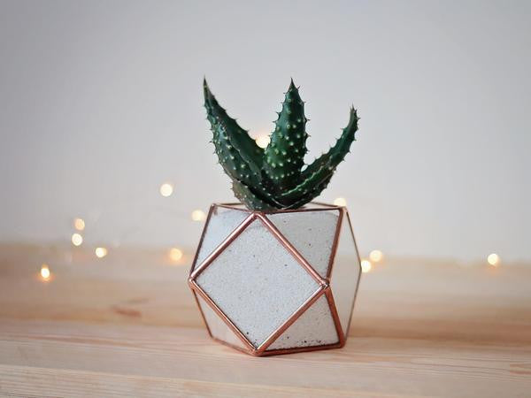 glass succulent planter