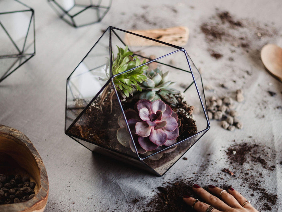 large-glass-terrarium