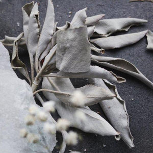 White Sage Clearing Mist - 100% White Sage Infusion