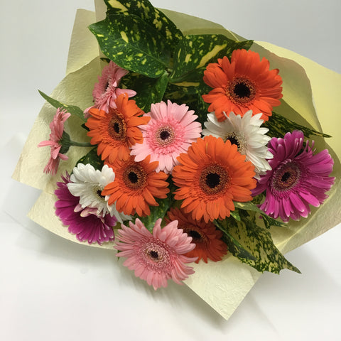 Gerbera Lovers