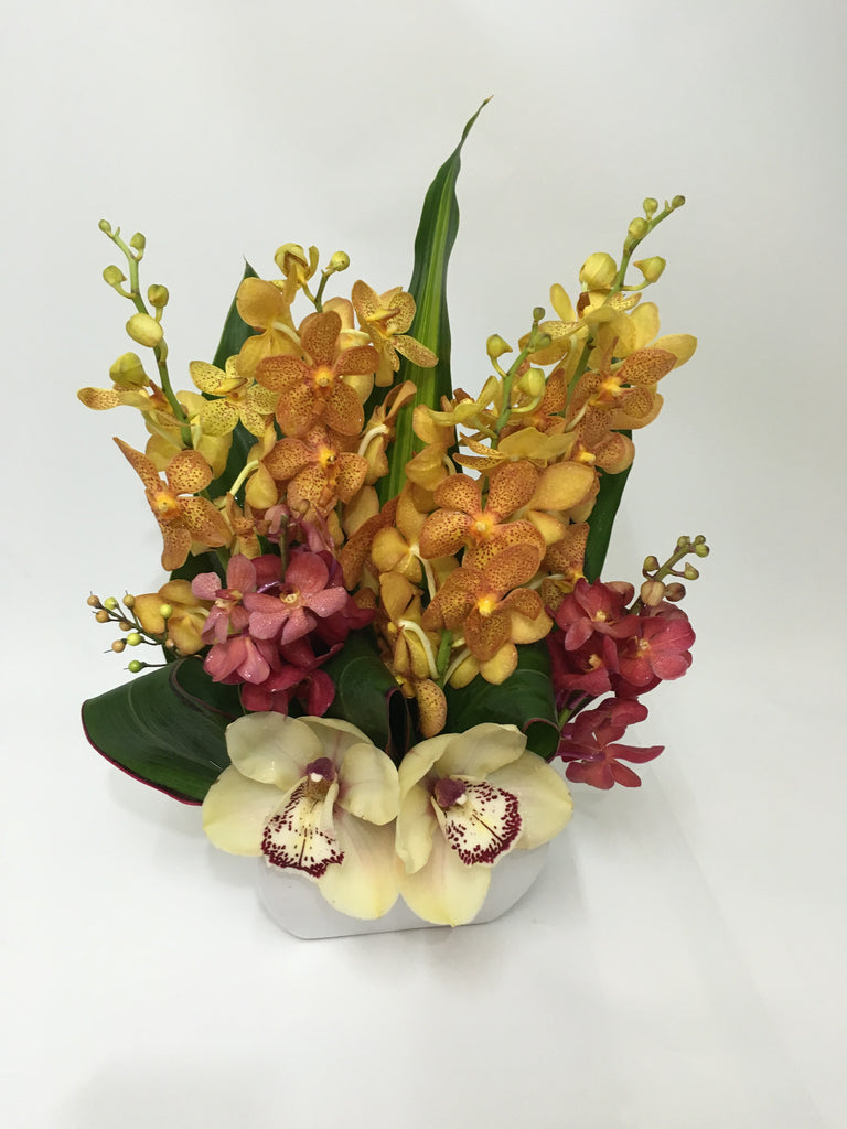 all orchid arrangement