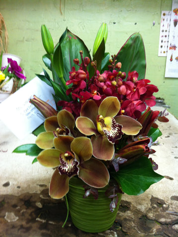 Tropical Orchid Paradise