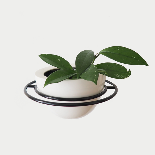 Bloom Wall Planter