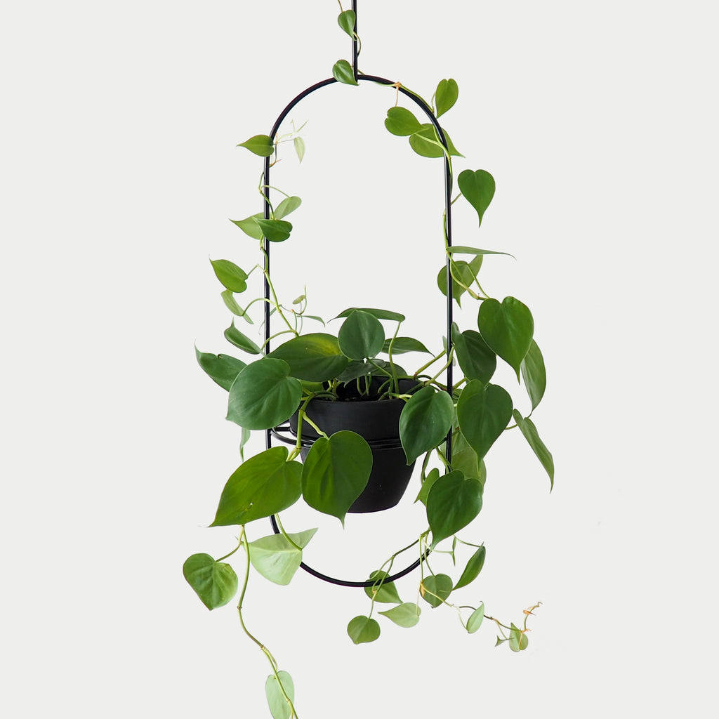 Luna Hanging Planter