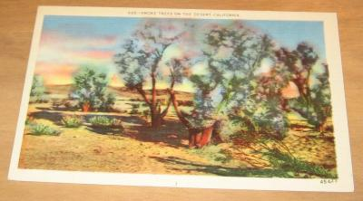 Vintage Smoke Trees On The Desert California Postcard