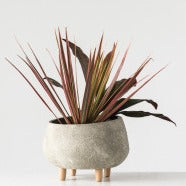 Grey Terracotta Planter with Cement Finish & Wood Feet