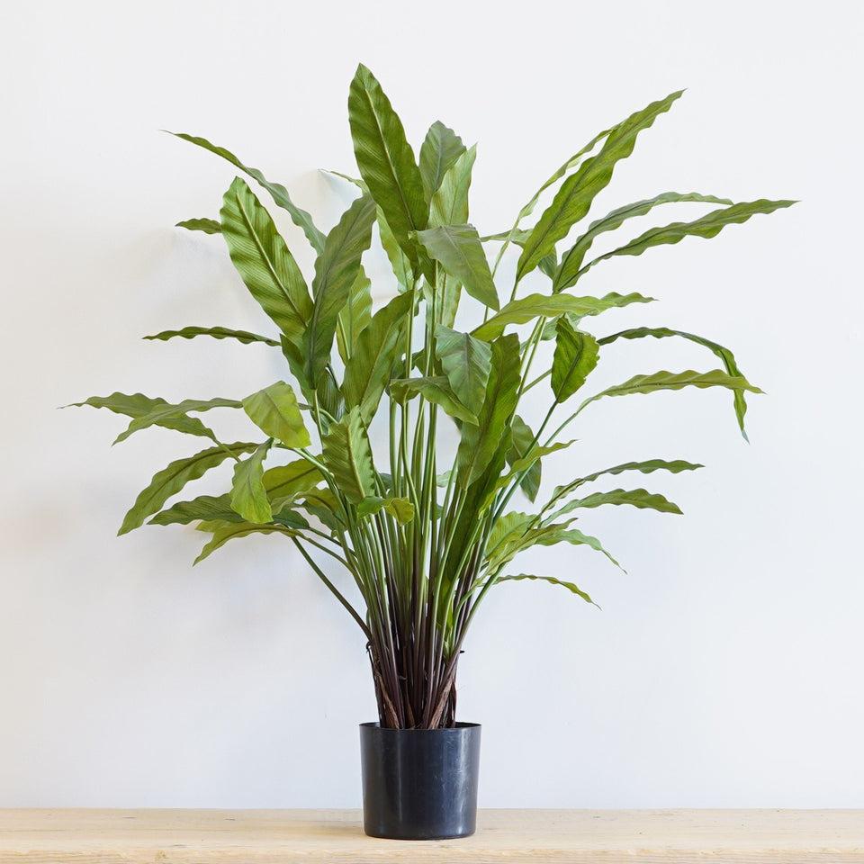 Calathea Potted Bush - 82cm / Green - Artificials