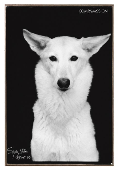 Beta - Save Them Rescue Us Birch Wood And Classic Metal Sign Dog Portrait