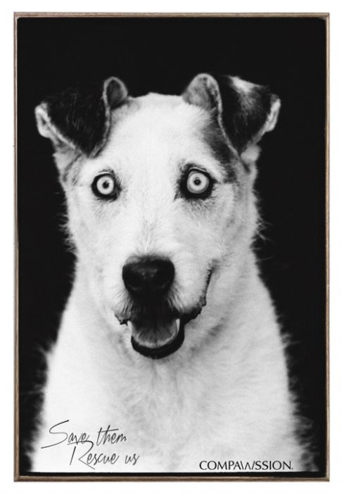 Blue - Save Them Rescue Us Birch Wood And Classic Metal Sign Dog Portrait
