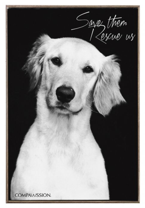 Harley-Quinn - Save Them Rescue Us Birch Wood And Classic Metal Sign Dog Portrait
