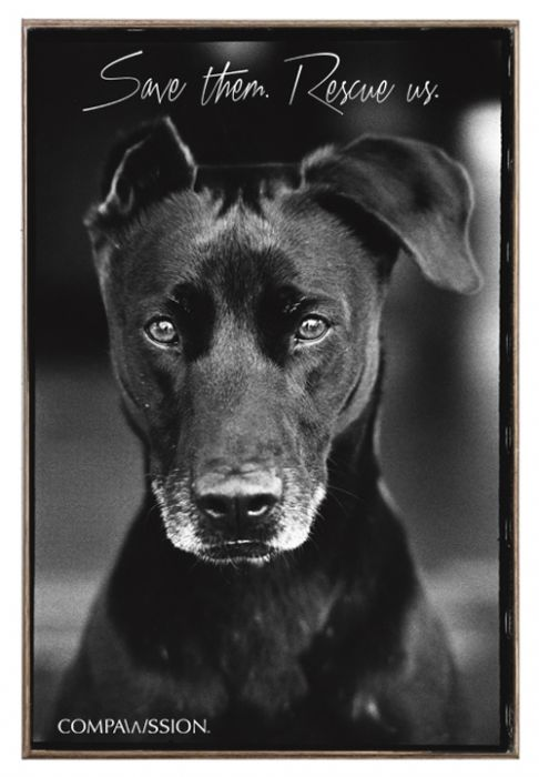Jake - Save Them Rescue Us Birch Wood And Classic Metal Sign Dog Portrait