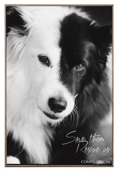 Lucky - Save Them Rescue Us Birch Wood And Classic Metal Sign Dog Portrait