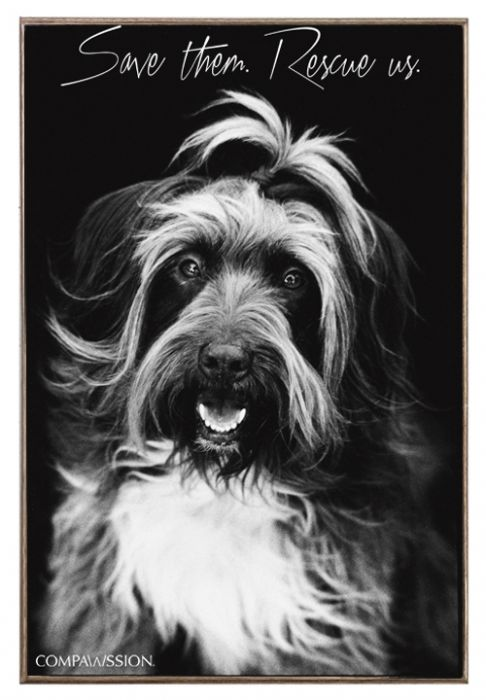 Margo - Save Them Rescue Us Birch Wood And Classic Metal Sign Dog Portrait