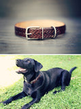 Personalized Leather Dog Collar, Chevron pattern